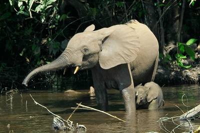 InterNations Expat Blog Sparkly Elephant Pic 3