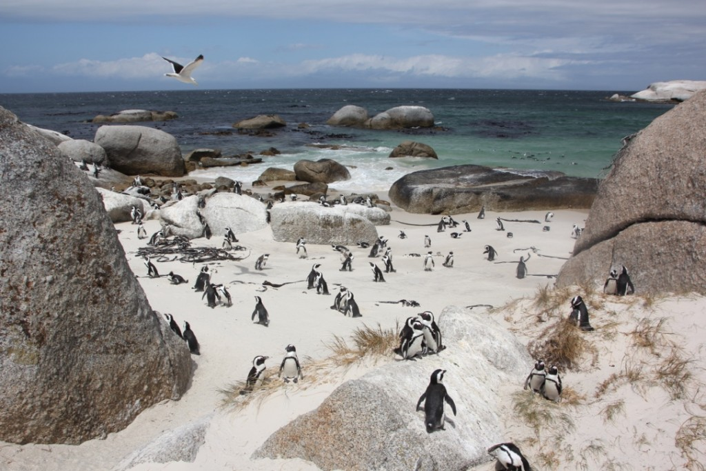 InterNations Expat Blog_Five Activities That Are a Must in Cape Town_Pic 2