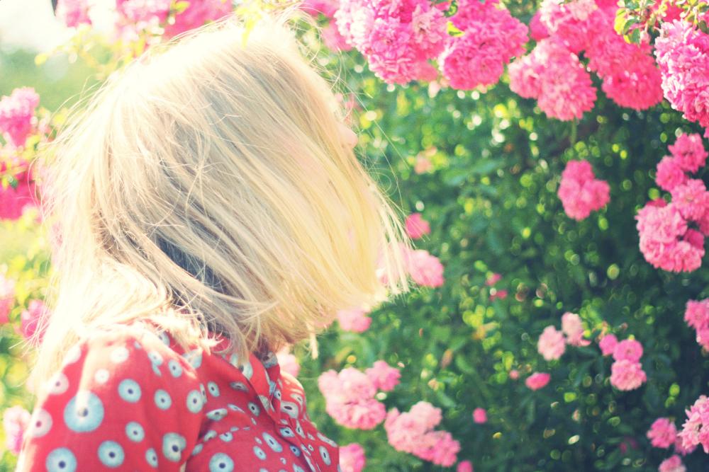 Life-of-Pix-free-stock-photos-pink-flowers-woman-juliacaesar